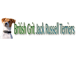 British Grit Jack Russell Terriers
